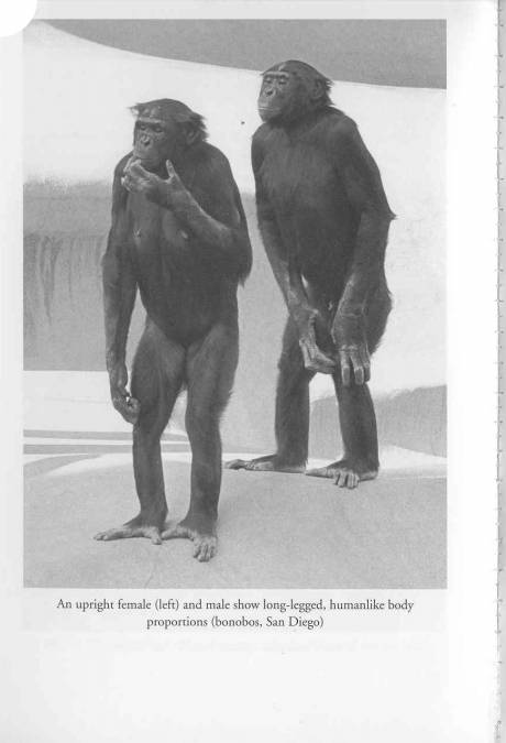 460_0___30_0_0_0_0_0_2_bonobos.jpg
