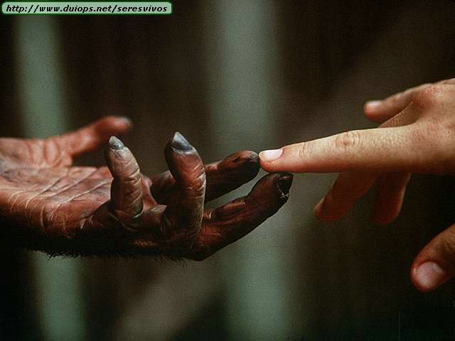 bonobo-mani