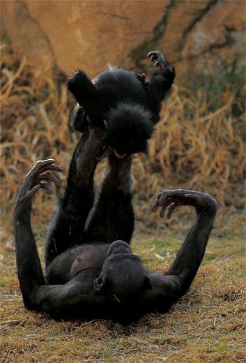 bonobo_aeroplanino