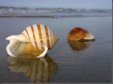 conchiglie%20su%20spiaggia2