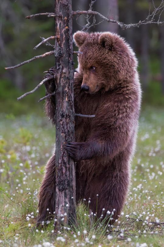 animali orso 1