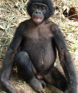 bonobo Andrea