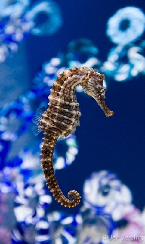 Aquarium photography is one of the most challenging environments to make good images, specifically, the photographer has to deal with dark conditions, rapidly moving subjects, and distracting parasitic reflections.