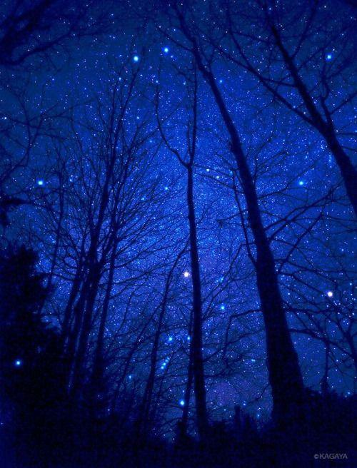 cielo stellato alberi
