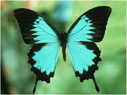 ali di farfalla 1