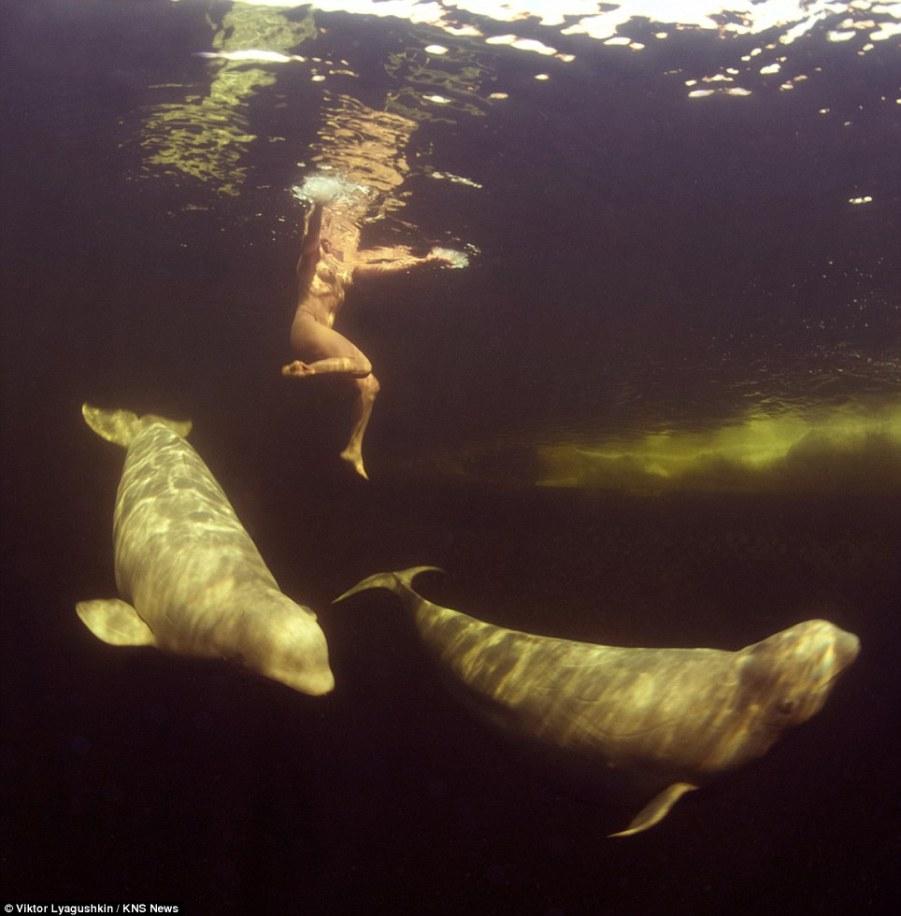 scienziata scende tra le beluga