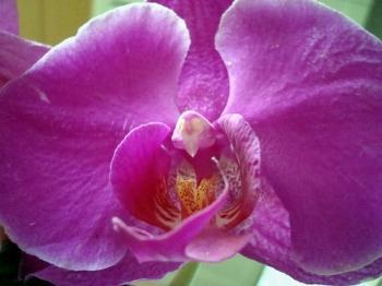 vagina fiore 3